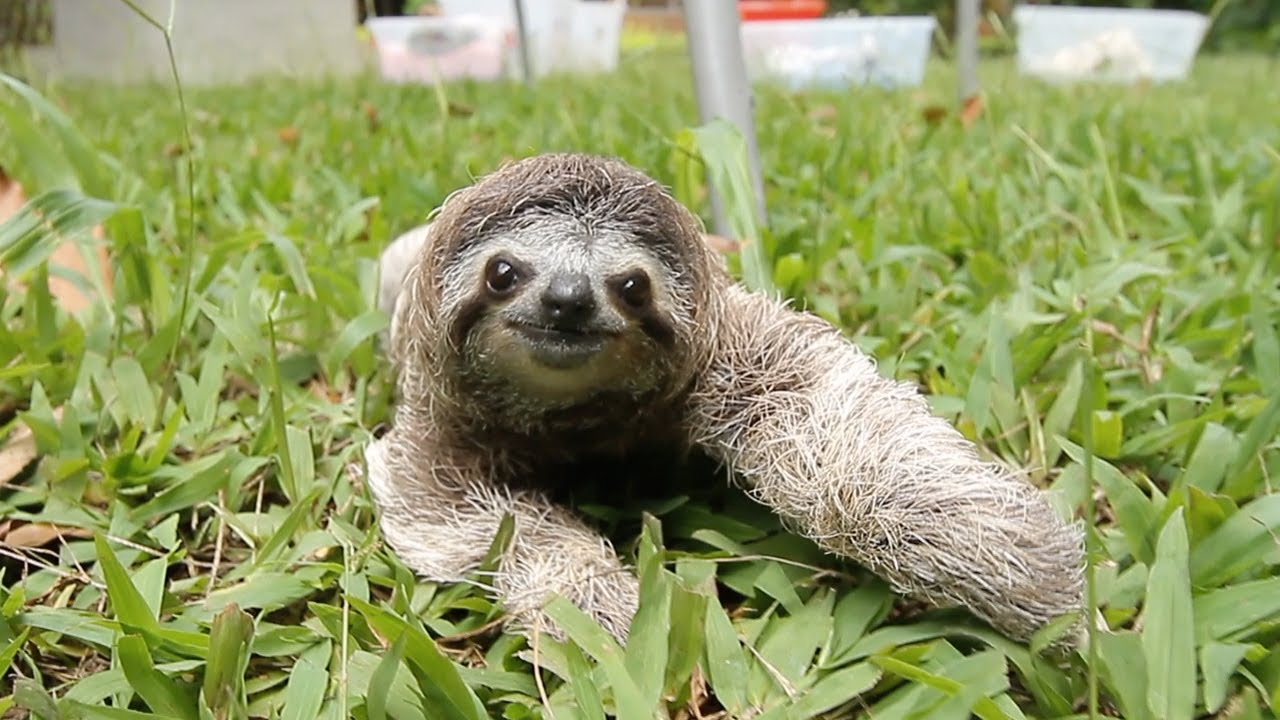 Image result for sloth