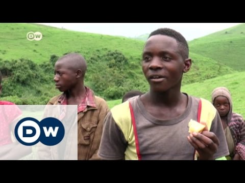 Making cheese in eastern DR Congo | DW News