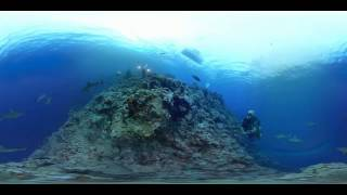 360° Video - Take an amaizing swim with sharks swiming around you - Diving new video technology