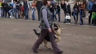 Дрессировка собак г. Житомир тел. 0963767961