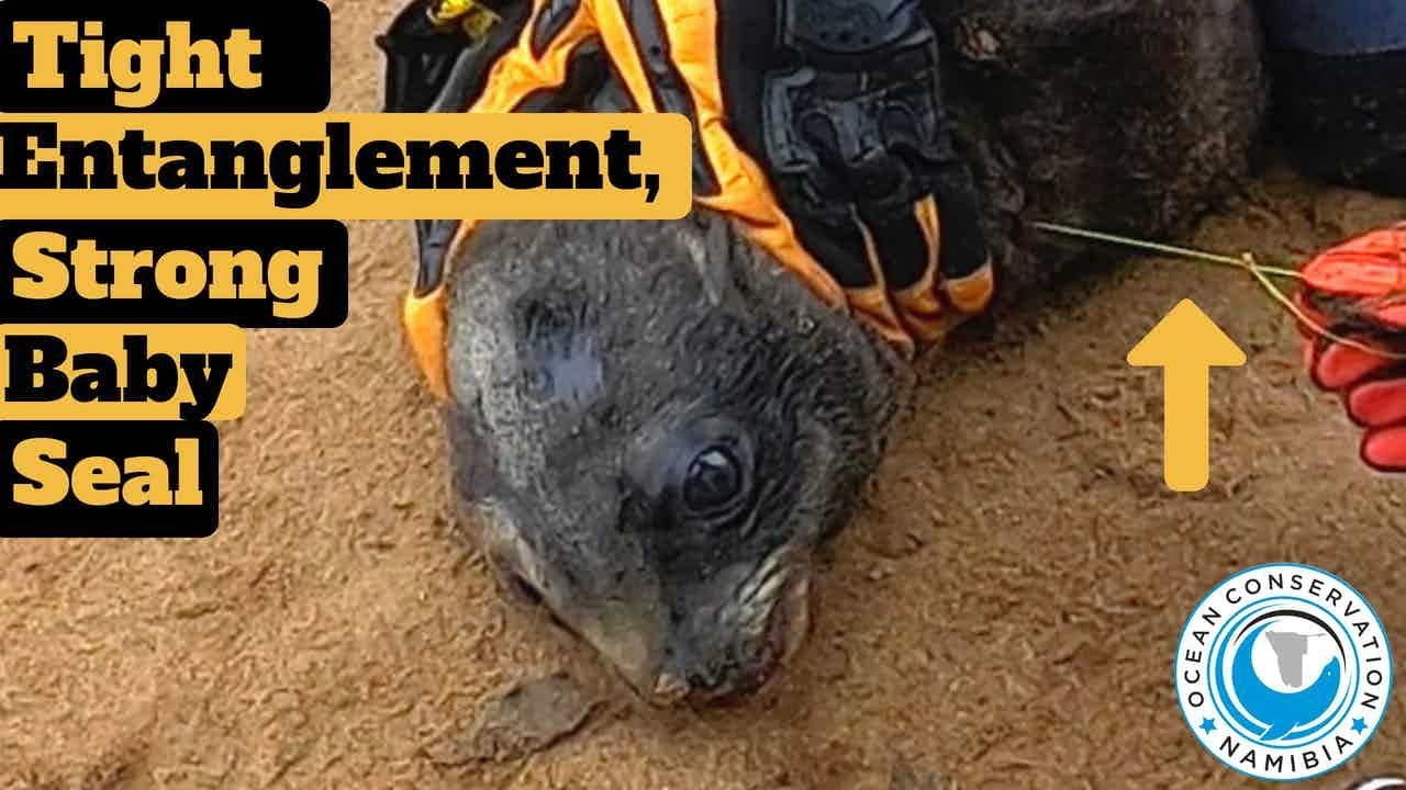 Tight Entanglement, Strong Baby Seal