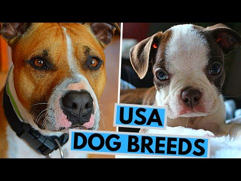 TOP 25 USA Dog Breeds
