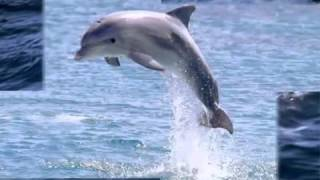01 Шум моря и крик чаек    online video cutter com(, 2014-12-16T18:39:42.000Z)