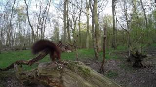 Wild Life Photography Bird Table In Forest Winter 2014-2015