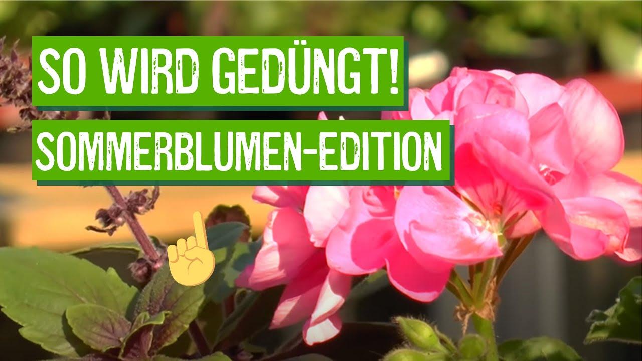 sommerblumen richtig pflanzen und düngen - der grüne tipp - youtube