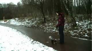 Дрессировка йоркширского терьера http://dogclass.ru/