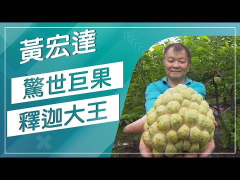 草地狀元-台灣的釋迦故鄉在哪你知道嗎(20160912播出)careermaster