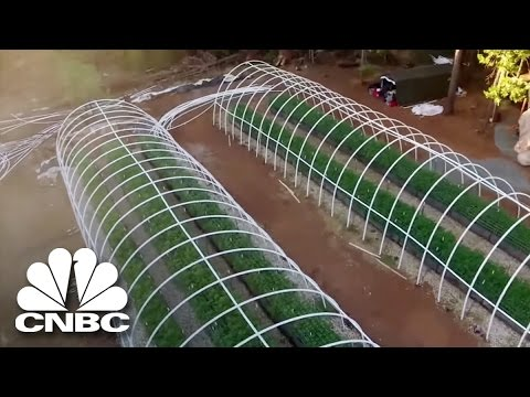 Black Market Marijuana: Why Weed Grows Better In California | American Vice | CNBC Prime