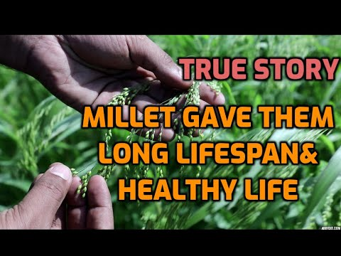 Millet Gave Them  Lifespan& Healthy Life# Year Of Millet 2023#millet Documentary