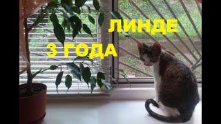 Кошке Линде 3 года