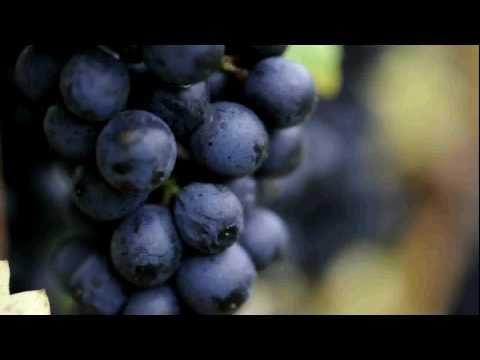 Michigan's transformation into a wine destination