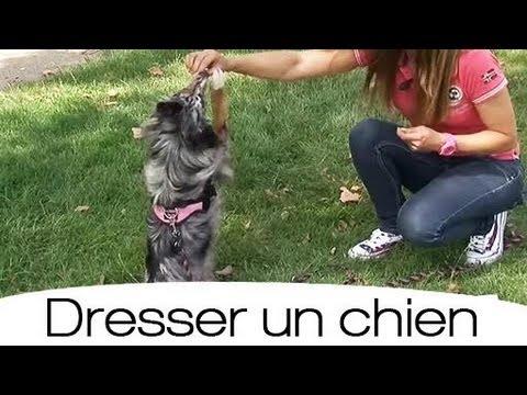 Apprendre à son chien à faire le beau - YouTube
