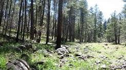 Rocky Park - Coconino NF, Munds Park, Arizona - RV Camping