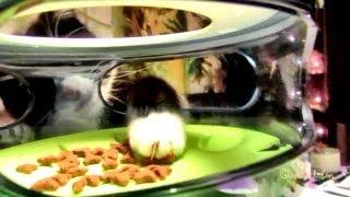 Catit food maze  Puzzle feeder 1st Test Futter Labyrinth Katze Cat Kitty pet