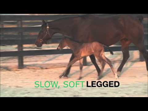 Good Cowboy Margarita FIRST FOAL
