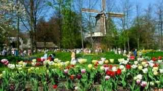 Herman Emmink   Tulpen uit Amsterdam