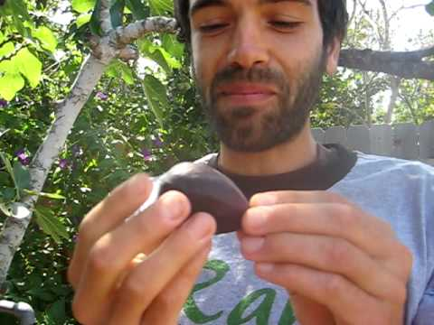 How to eat a Fig!