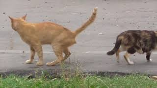 котомамы моего двора - сентябрь
