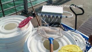 Video Best DIY Fishing Cart How to download MP3, 3GP, MP4, WEBM, AVI, FLV Februari 2018