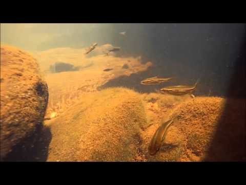Some South African Fresh Water Fish Species