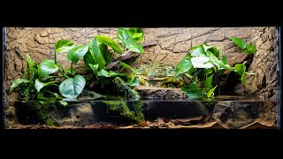 The NEW Pixie Frog (African Bullfrog) Paludarium