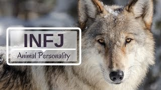 INFJ Animal Personality - Myers Briggs Personality Type