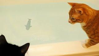 Cats vs Rare Bathtub SHARK! thumbnail