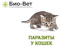 Паразиты у кошек. Ветеринарная клиника Био-Вет.