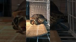 멍때리는 영상 마실나온 거북이