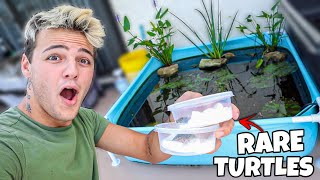 BUYING TINY TURTLES for My mini POOL POND!!