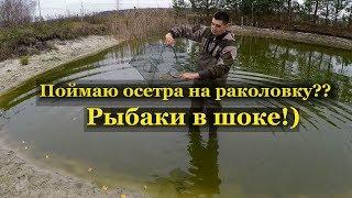 Мой пруд с рыбой Пруд на даче Выпустил ведро рыбы в реку рыбаки в шоке