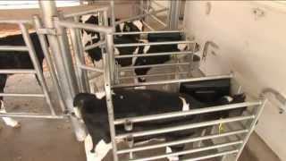 Gea Farm Technologies - Dairyfeed Automated Calf Feeders