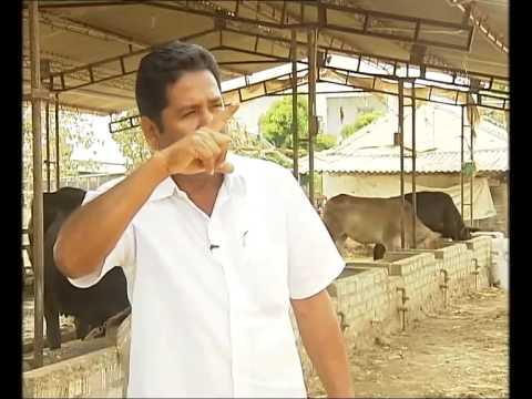 Nivetha Goat Farms