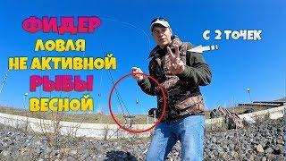 Весенний фидер против не активной рыбы / Поиск точки ловли