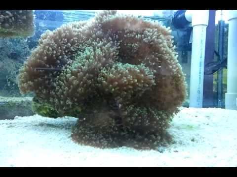 Hairy Mushrooms 18