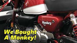 Honda Monkey First Look