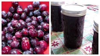 How Make Plum Jam Easy Yummy