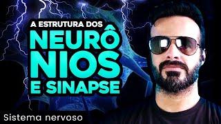 Vídeo Aula 008 - Sistema Nervoso - Anatomia Humana - Estrutura dos neurônios e sinapse