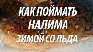 ЛОВЛЯ НАЛИМА ЗИМОЙ СО ЛЬДА. ЗИМНЯЯ РЫБАЛКА НА РЫБИНСКОМ ВОДОХРАНИЛИЩЕ(Ловля налима зимой на удочку и жерлицы со льда. Какую применить снасть, наживку и приманки на рыбу налим,..., 2016-11-08T07:00:02.000Z)