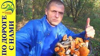видео Осенние грибы. Фото