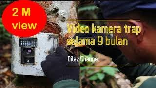 Rekaman video di hutan selama 9 bulan ... !!!