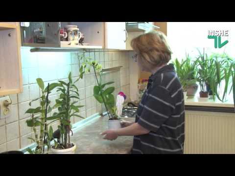 Делай с нами: Размножение орхидей