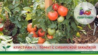 КРИСТИАН F1 - ТОМАТ С СИБИРСКОЙ ЗАКАЛКОЙ