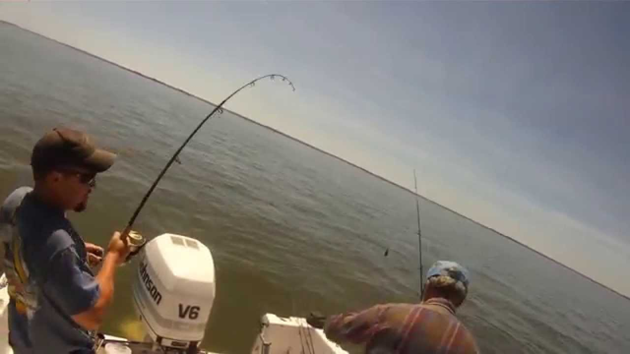 red drum, cobia and speckled trout fishing, chesapeake bay off, Fishing Bait