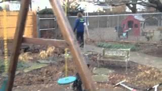 Puppy Training Foundation Work Solid K9 Training