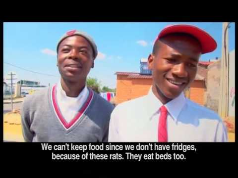 3 Young People Help Solve the Issue of High Rodent Populations in Alexandra - Pt1