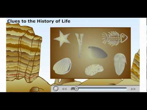 explain radiocarbon dating of fossils