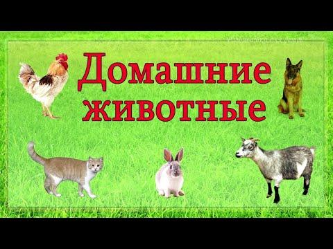 УЧИМ ЖИВОТНЫХ / РАЗВИВАЮЩИЕ МУЛЬТИКИ про животных для детей! Звуки животных