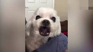 Cute and Funny Animals Compilation #9