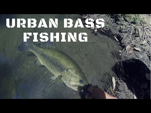 Urban Creek Fishing In San Jose CA